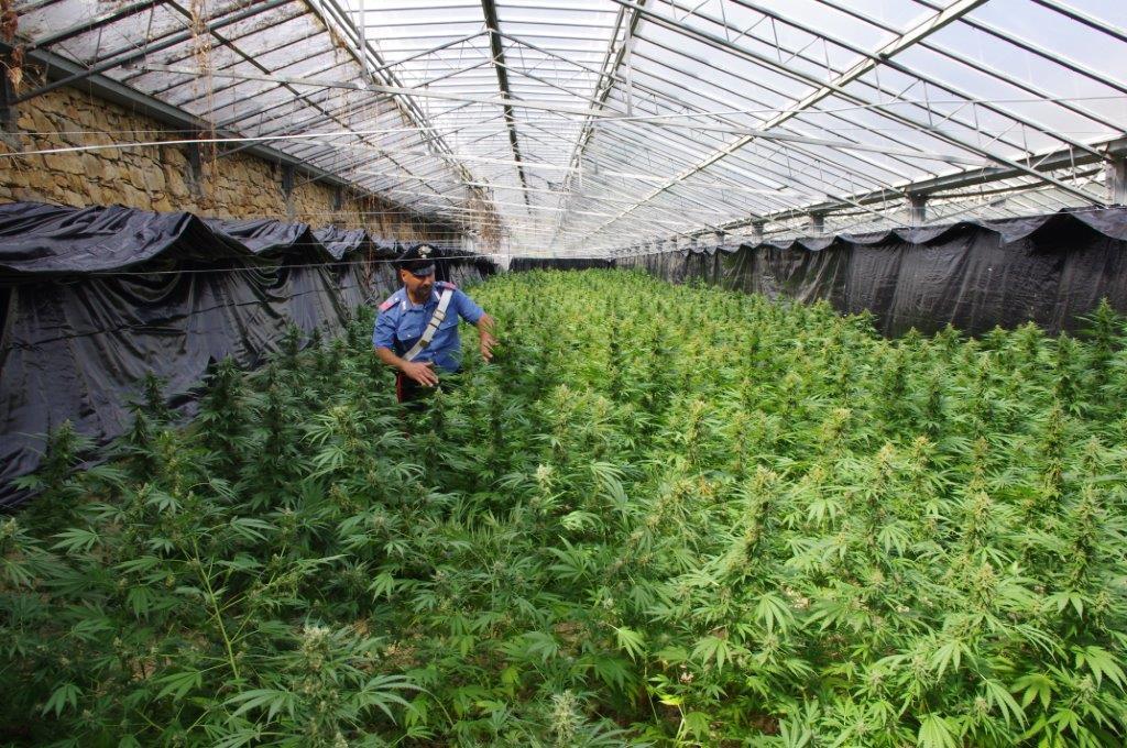 Sanremo trovata maxi serra di marijuana carabinieri for Serra per piante
